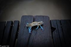 Crab-Men-1