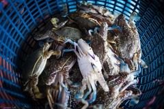 Crab-Market-2-9